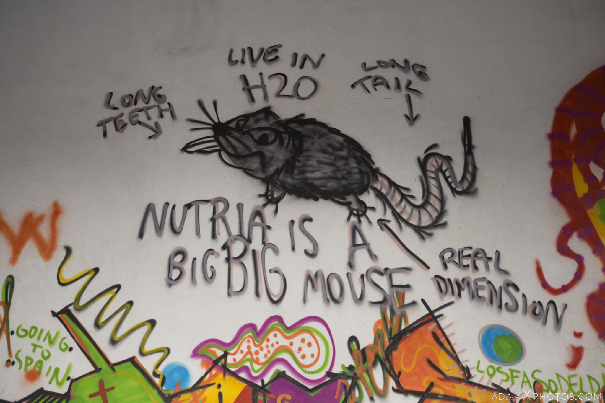 Nutria is a big big mouse graffiti colourful La fabbrica dei colori factory Adam X Urban Exploration Italy Italia Access 2016 Abandoned decay lost forgotten derelict location creepy haunting eerie
