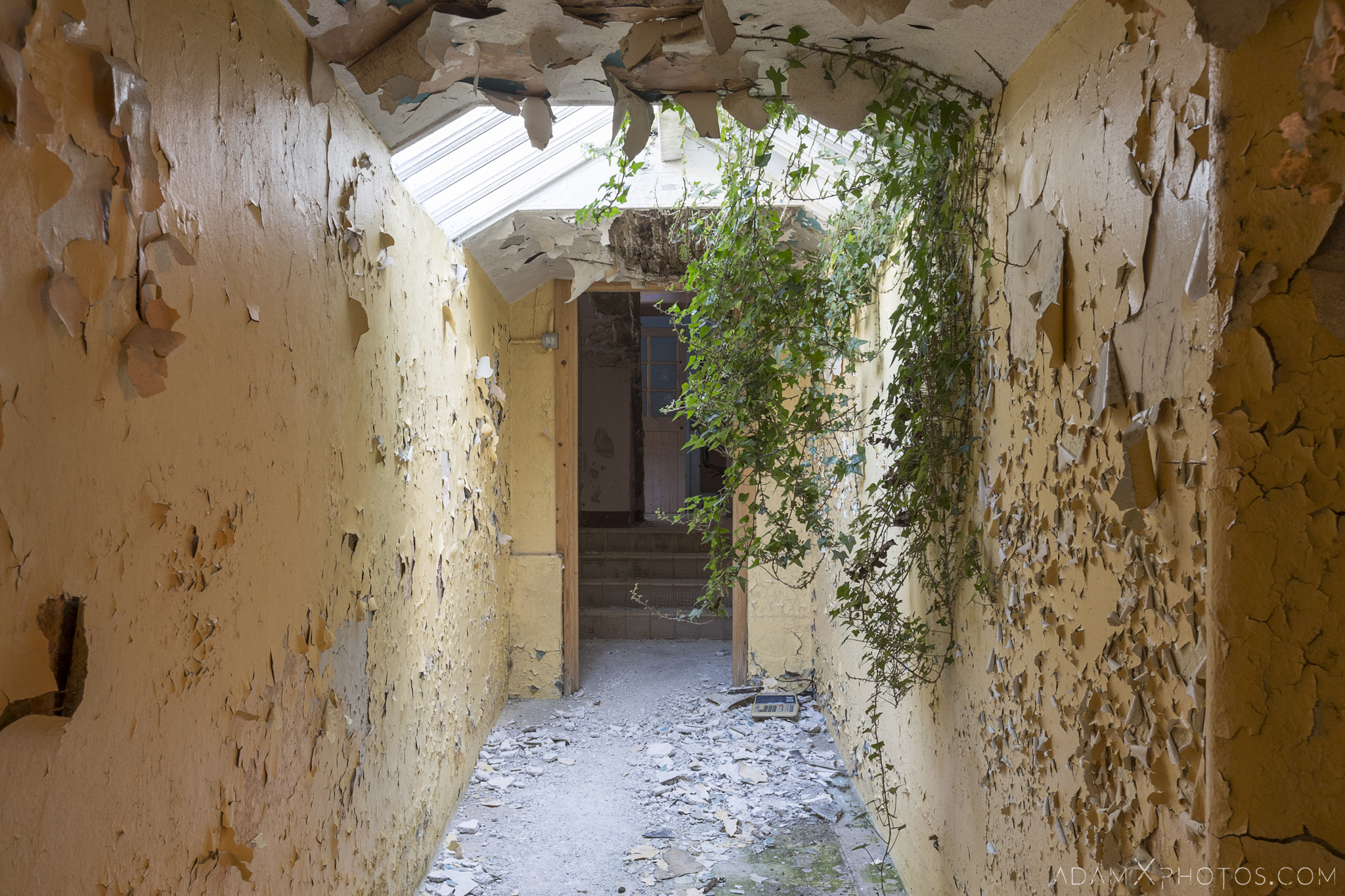 when nature takes over ivy overgrown corridor peeling paint Connacht District Lunatic Asylum St Brigid's Hospital Adam X Urbex Urban Exploration Ireland Ballinasloe Access 2017 Abandoned decay lost forgotten derelict location creepy haunting eerie