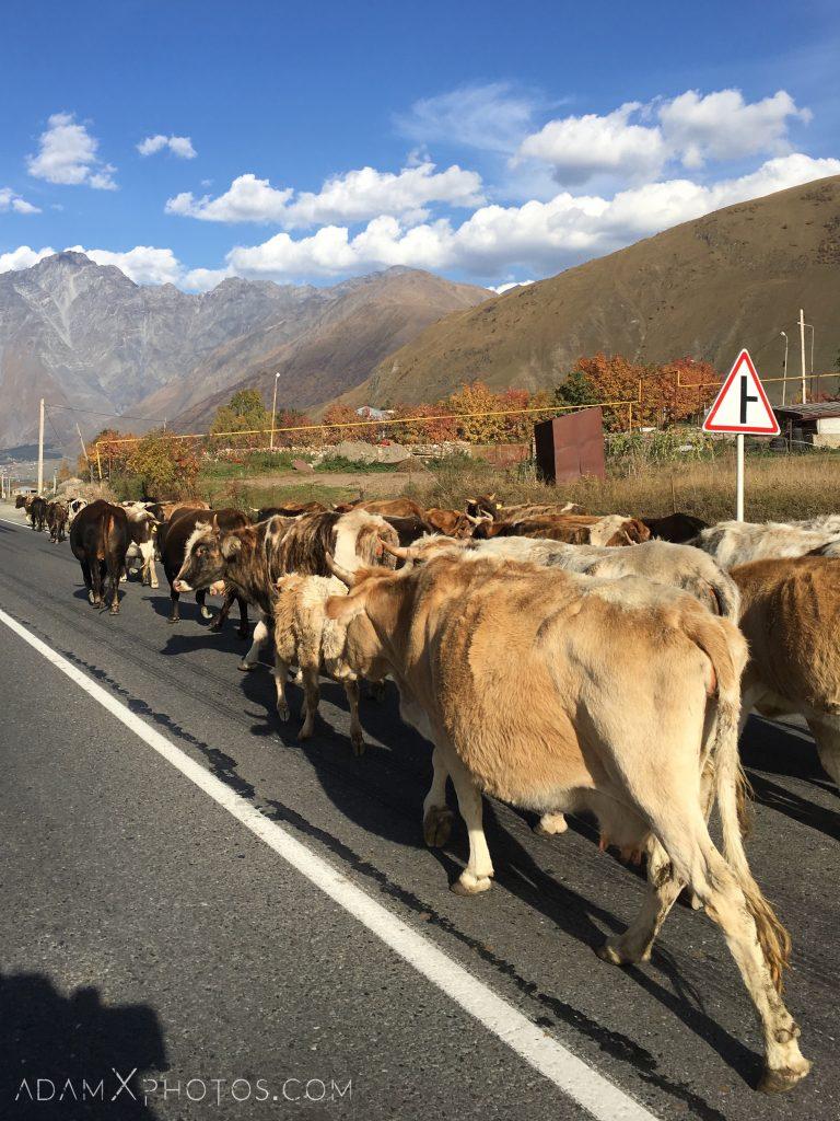 Georgia road trip russian military highway cows